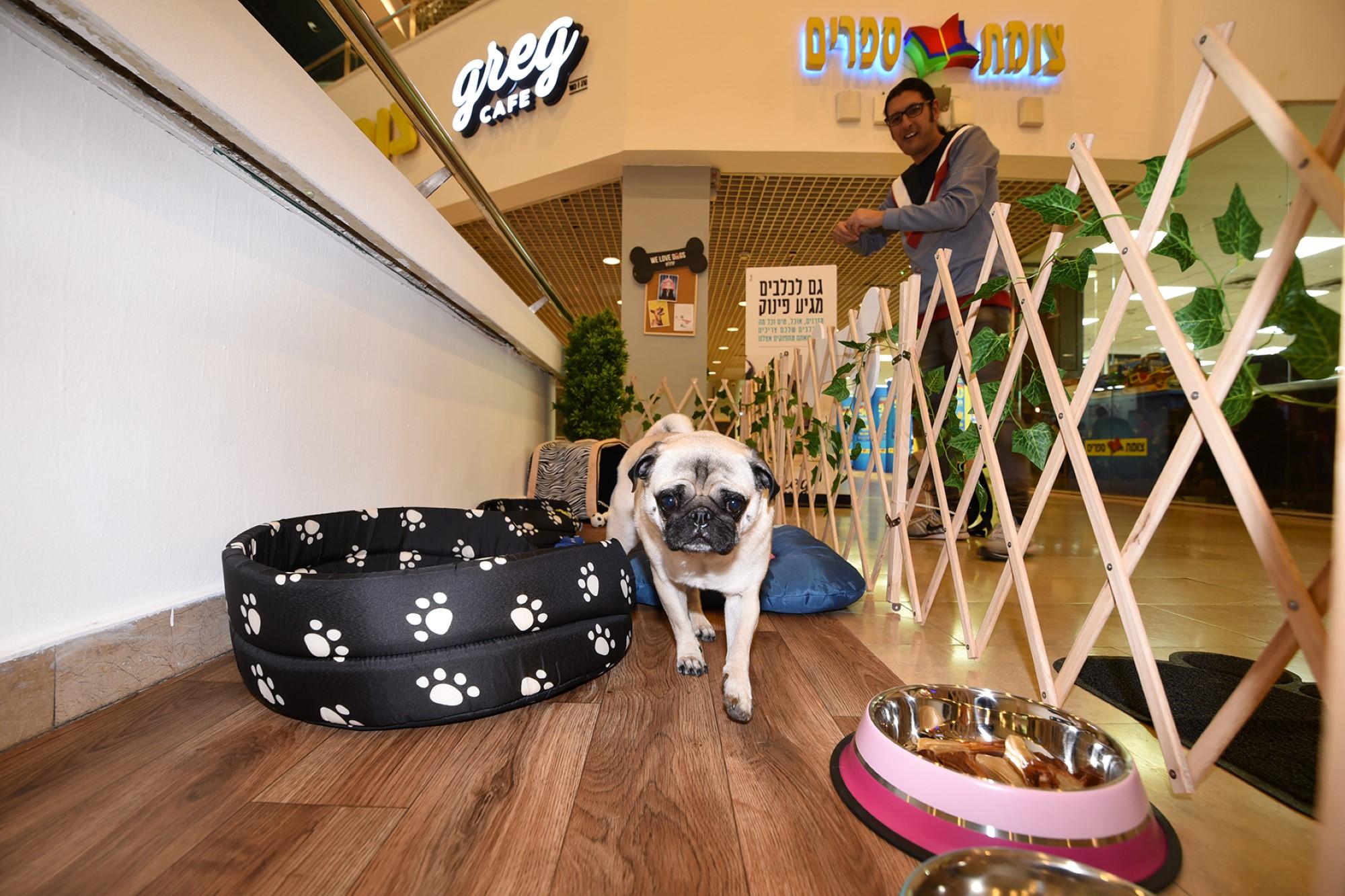 קפה גרג מציעה מתחם כלבים בסניף דיזינגוף סנטר צלם אלעד גוטמן