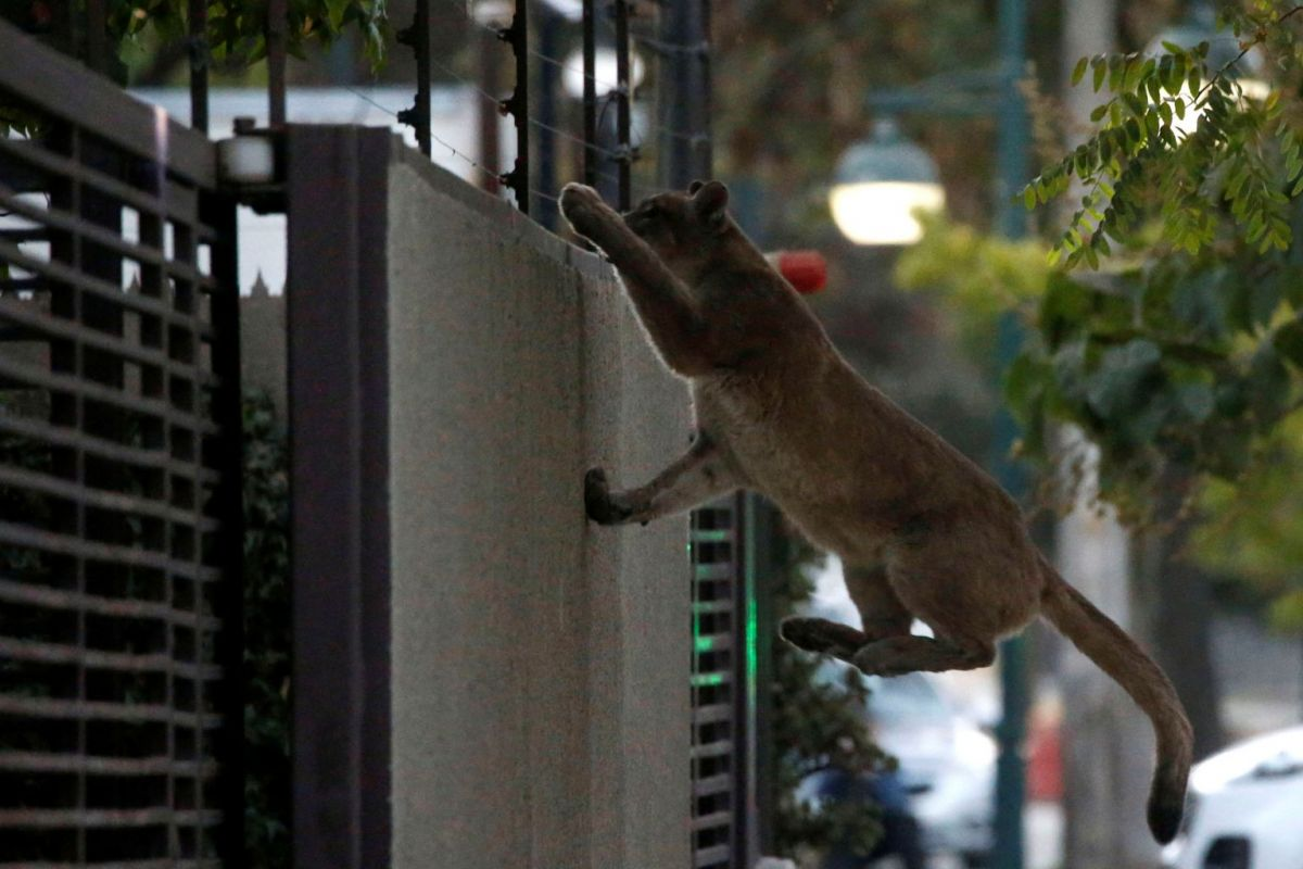 חיות ברחובות
