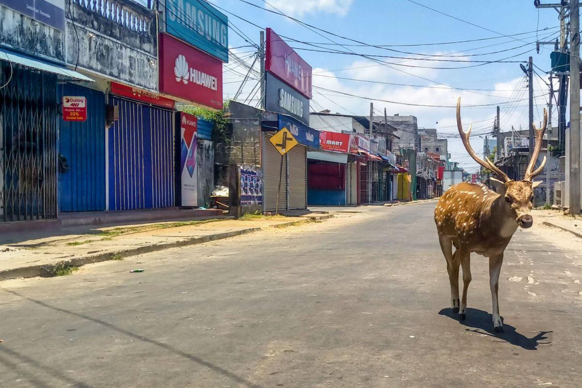 אייל בר משוטט ברחוב שומם במהלך נעילת ממשלה שהוטלה על ידי הממשלה בעיר הנמל טרינקומלי, סרי לנקה, ב -31 במרץ, 2020. פוטו: AFP